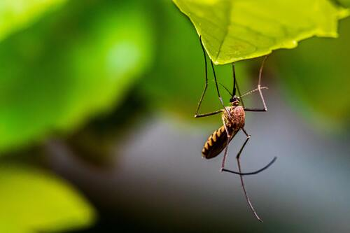 Blog moustique