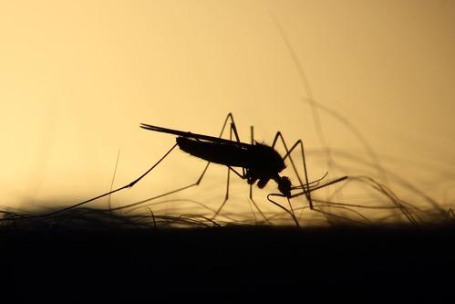 anti moustique extérieur soirée