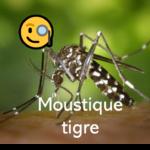 Moustique tigre