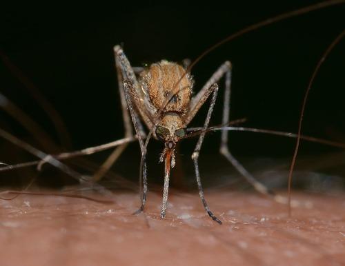 anti moustique tigre