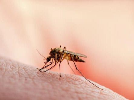 danger piqure moustique tigre